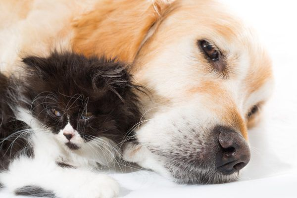 A dog and kitten sleeping and relaxing together.