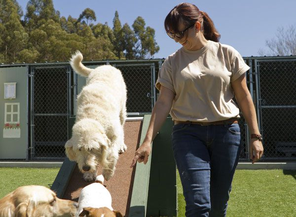 Stock photo a mixed breed poodle at a pet boarding facility. by Shutterstock.