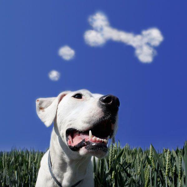 All day, dogs dream about food. Hund träumt von Knochen by Shutterstock.