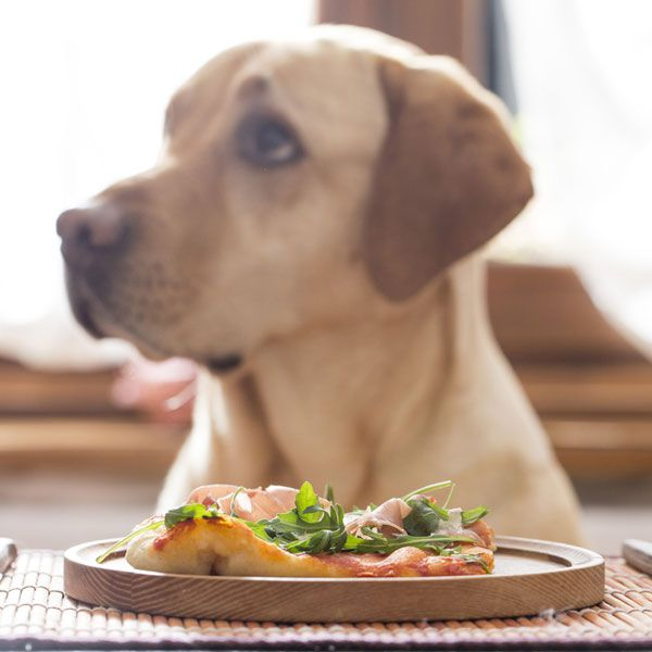 If you leave your veggie pizza where the dog can reach it, be assured he'll give it a taste. Pizza with dog by Shutterstock.