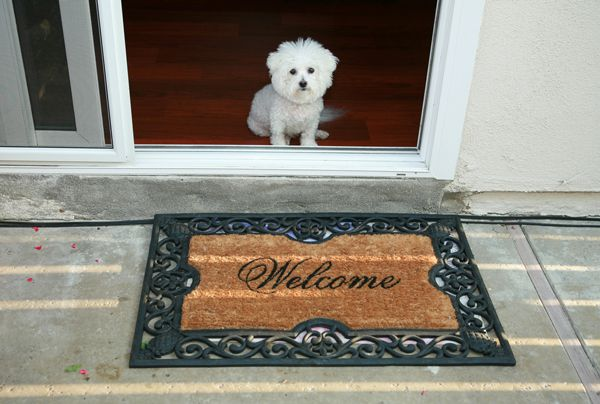 Of course your dog is excited you are home, but they can learn to contain it -- mikeledray/Shutterstock
