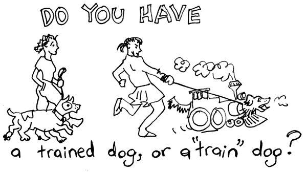 train-dog