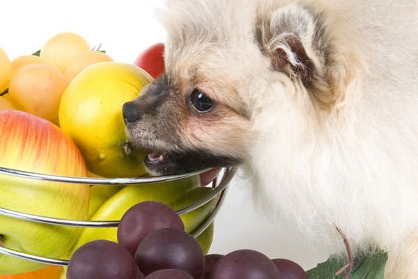 A dog with a bowl of exotic fruits.