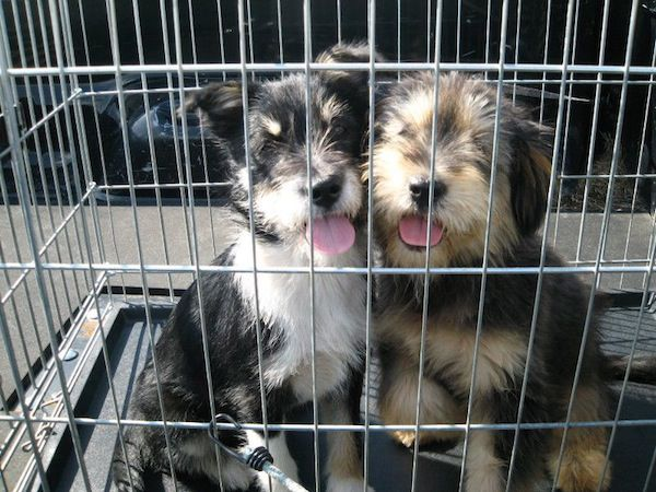 Puppies are cute on the outside, but what's happening in their young and still-forming brains matters most in setting a puppy up for a happy life with humans.