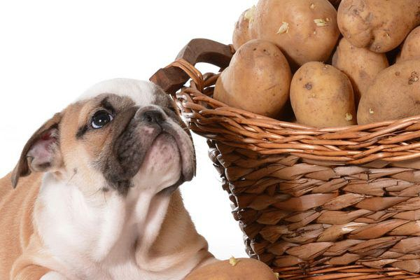 A puppy with a basket of potatoes.