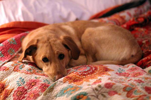 """""""Can't you sleep in again with me?"""" (Photo by Heather Burt)"""
