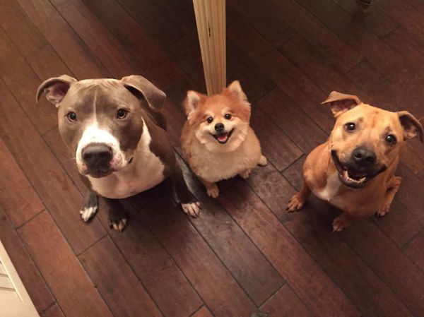 Hudson fits right in with his siblings, Simba and Sami.