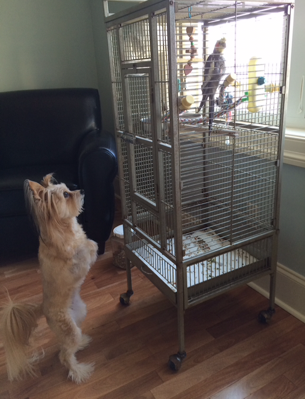 Petie is spending more time indoors these days, but Jeanie is still checking up on him.