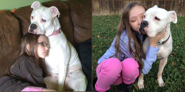 A young girl with an American bulldog.