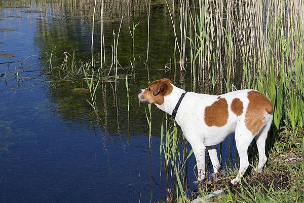 Watch out, raccoons might be lurking. A dog looks across a waterway by Shutterstock.