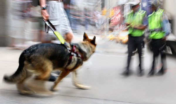 Guide dog with motion blur by Shutterstock.