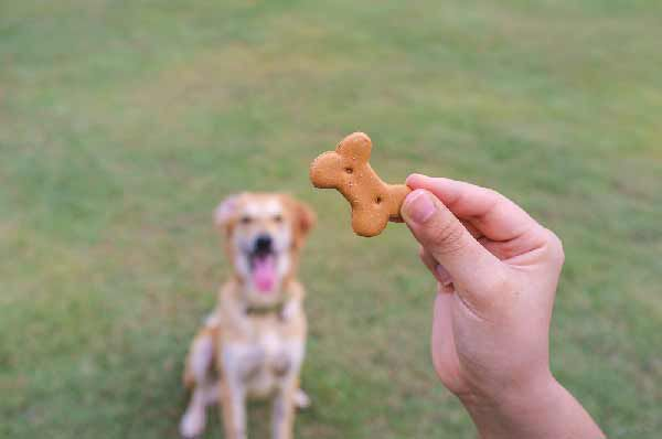 Dog waiting for biscuit by Shutterstock