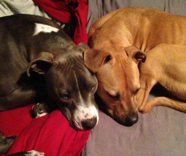 Hudson loves his big sister, Sami. (Image via Hudson the Railroad Puppy on Facebook)
