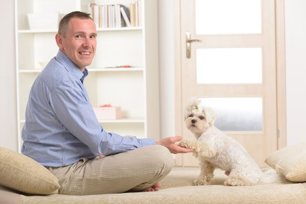 Maltese shaking paw with owner