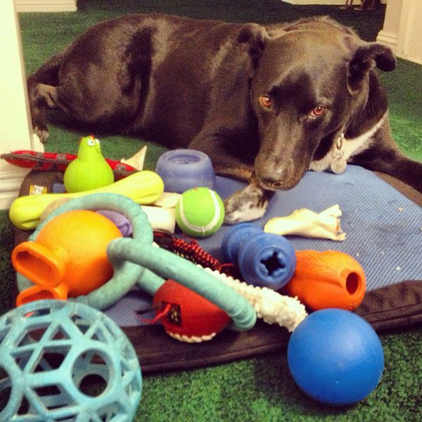 Riggins is perfectly happy staying inside and playing with his toys. (All photos by Wendy Newell unless otherwise noted)