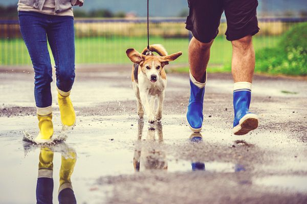 Young couple walking a dog in the rain by Shutterstock.com.