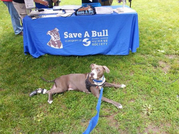 Hudson has attended plenty of animal advocacy events.