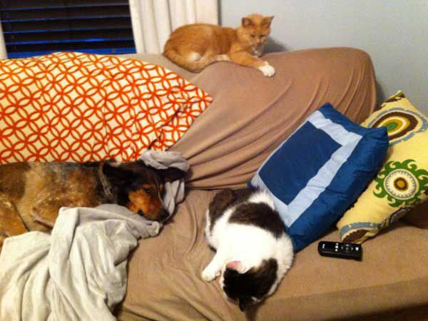No rodents are safe in this house. (Photo by Theresa Cramer)