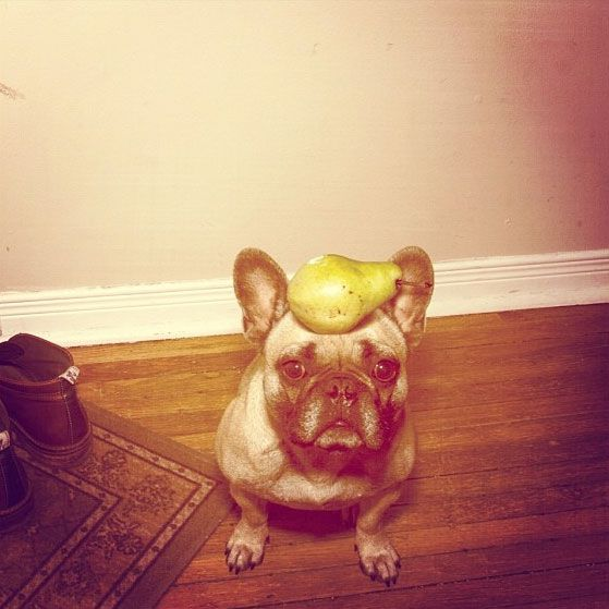 A dog with a fruit on his head. (Photo by mattmarek on Instagram)