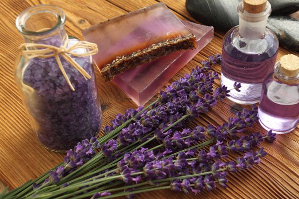 Can aromatherapy be helpful for dogs? Lavender flowers, coloured bathing salt by Shutterstock.