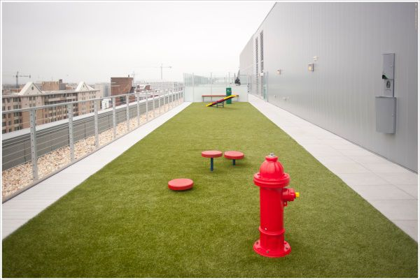 The rooftop dog run is a great place to burn off some excess energy.