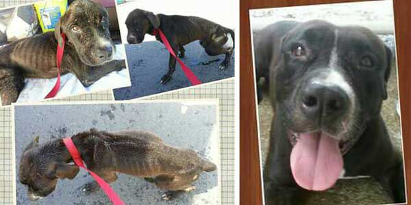 Ricardo before and after his rescue. (Photo via Save a Sato Facebook page)