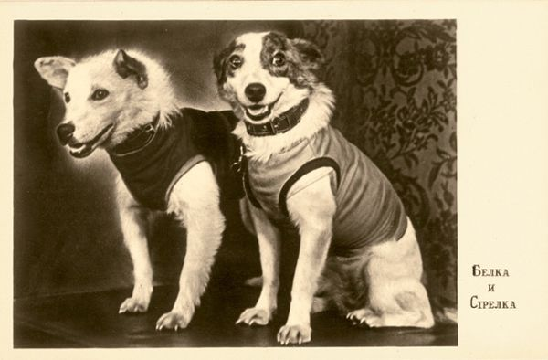 An image of Belka and Strelka from their first press conference.