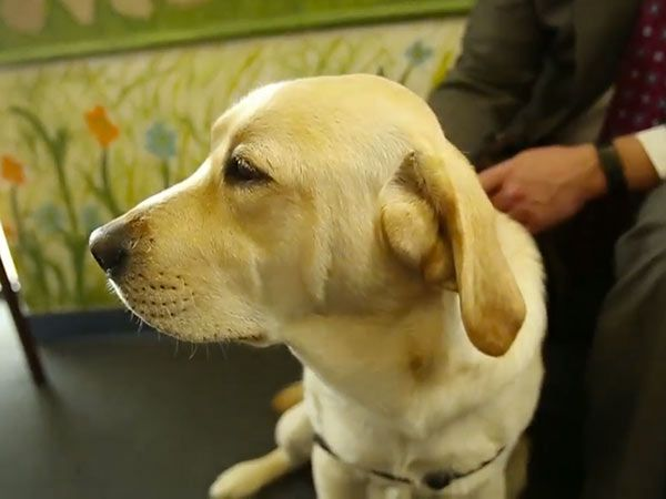 chicago-court-therapy-dog-mitchell-07