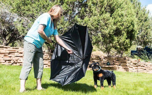 Annie Phenix demonstrates how to use an umbrella to keep a rushing dog back. (Photo by Tica Clarke Photography)