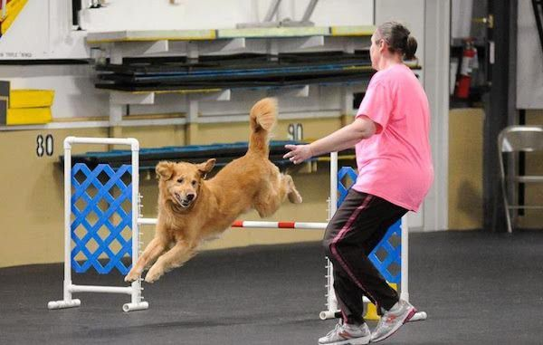 Trainer Deborah Abbot practices agility with her Golden Retriever. (Photo by Paw Prints for Life)