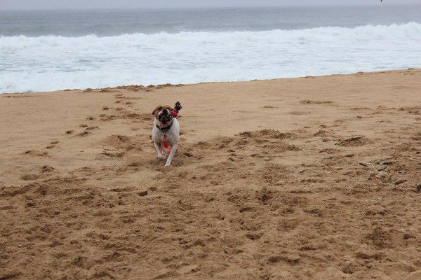 According to her foster mom, Ruby is a beach babe who needs plenty of walks and playtime.