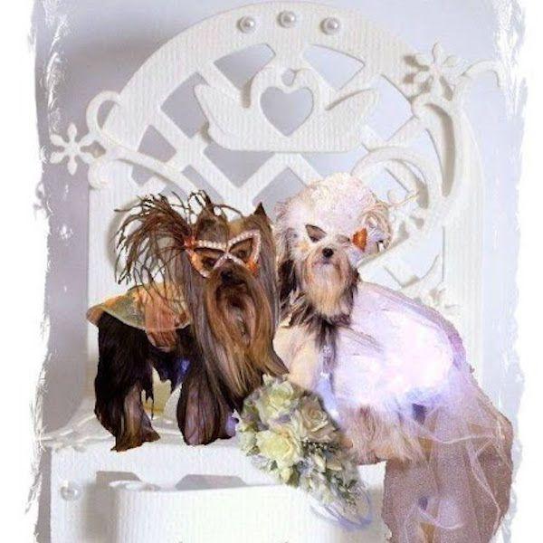 WeddingDogsZZTop