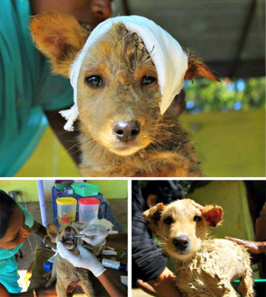 Dogs of all ages find help and lots of TLC at Animal Aid Unlimited.