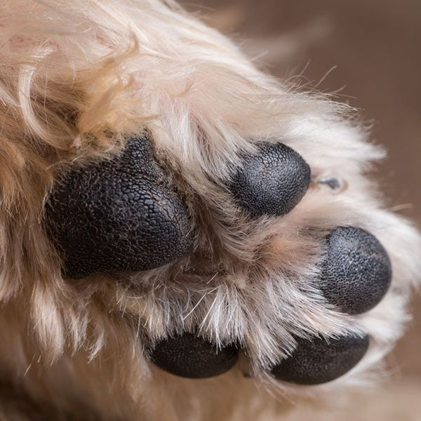 dog paws puppy paws