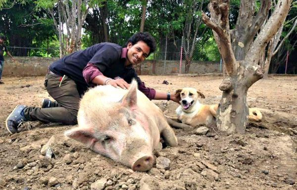 All of Udaipur's street animals in need are welcome at Animal Aid Unlimited. They treat everything from pigs and donkeys to buffalo and cows.