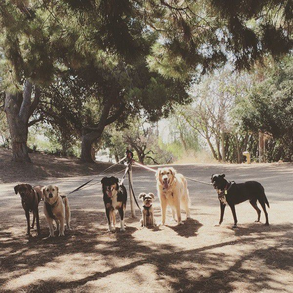 Riggins (far right) is put in charge of the pack while I take the dogs away one by one for photos. (Photo by Wendy Newell)