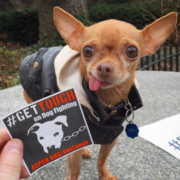 Mervin is a proud supporter of the ASPCA and he hates dog fighting.
