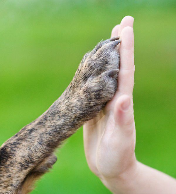 Dog paw and human hand by Shutterstock.