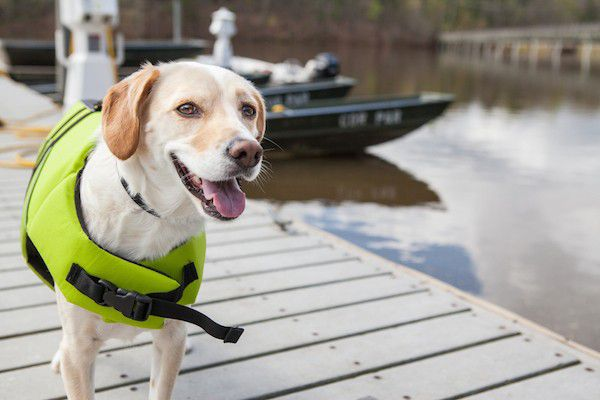 (Dog in a life jacket by Shutterstock)