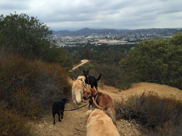 Riggins leads our guests on the trails. (Photo by Wendy Newell)