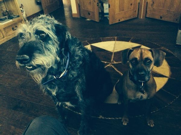 My dog Monster, left, with our houseguest Baxter. (Photo by Annie Phenix)