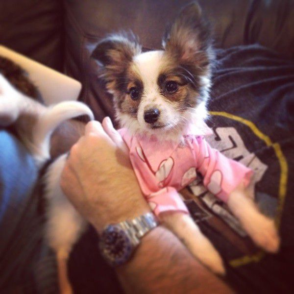Dorothy Barker can snuggle with the best of them. Especially in puppy pajamas. (Photo courtesy Jennifer Lawson)