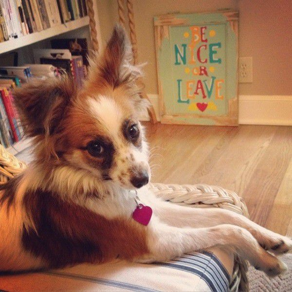 Dorothy Barker is one cute pooch, we suspect with a sophisticated sense of humor. (Photo courtesy Jennifer Lawson)