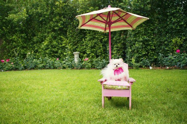 The Vanderpump Pets collection is for any pup with a great sense of style. (Photo by Vincent Sandoval.)