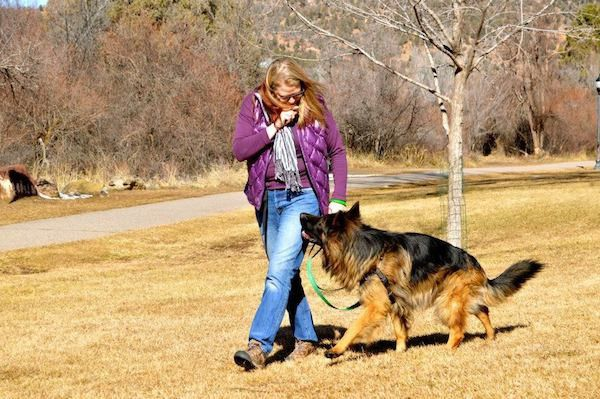 Here I am working with a German Shepherd who is a client. (Photo by Tica Clarke Photography)