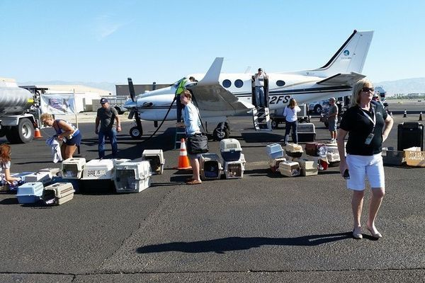 A group of volunteers working to get the dogs ready for flight. Photo credit: Wings of Rescue