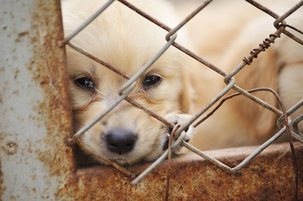 A puppy in a cage.