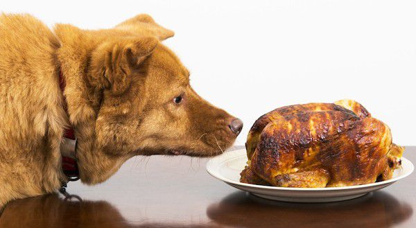 """Dog digging in the fridge by Shutterstock."""">Dog with rotisserie chicken by Shutterstock."""