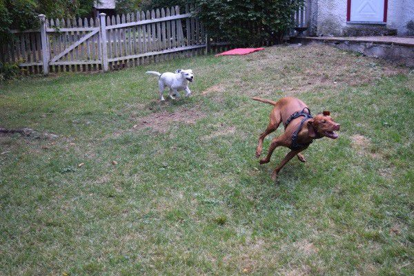 It's difficult to get Finley to slow down. (Photo by Whitney C. Harris)