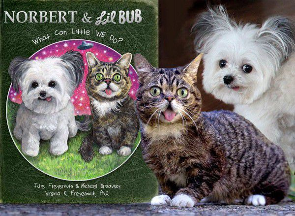 Norbert's shares the spotlight with Lil Bub in his third book. (Image courtesy Norbert's Facebook page)